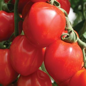 "Tomat ""Tomatoberry Grande"" 4 frön"