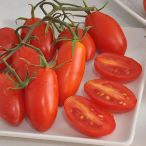 Tomat zuccherino F1 5 frön