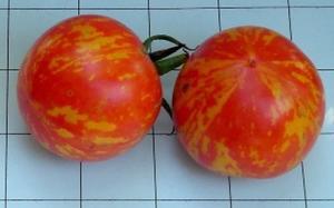 Tomat Red Zebra 5 frö