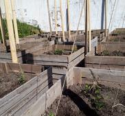 Bild på odling