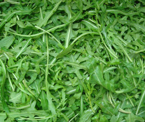 Ruccolasallat ca 400  frön